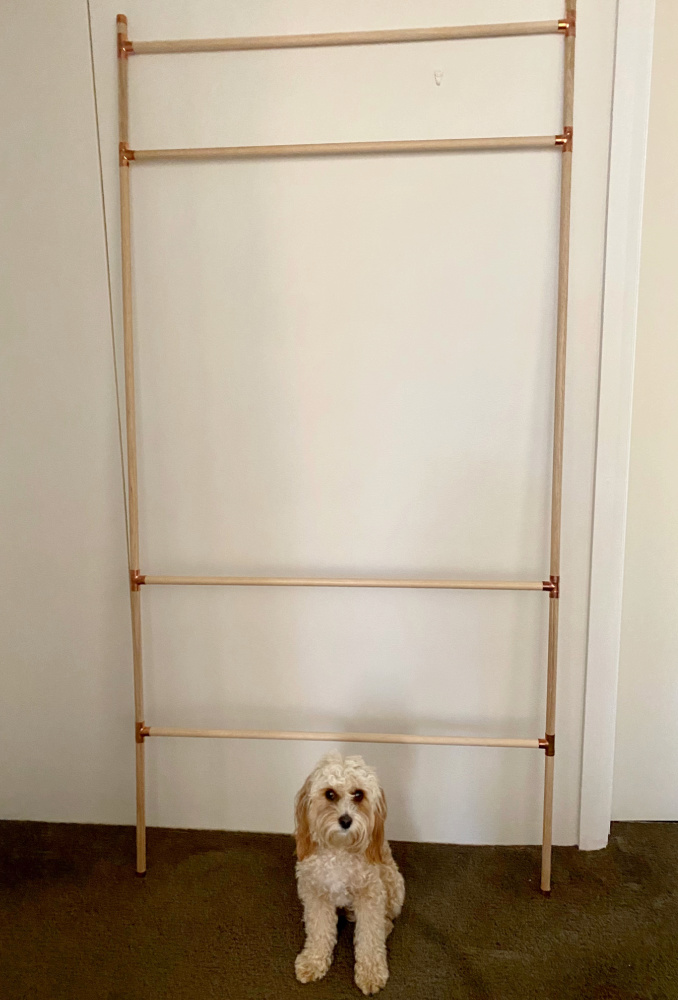 cavoodle sitting in front of a dog accessory storage ladder