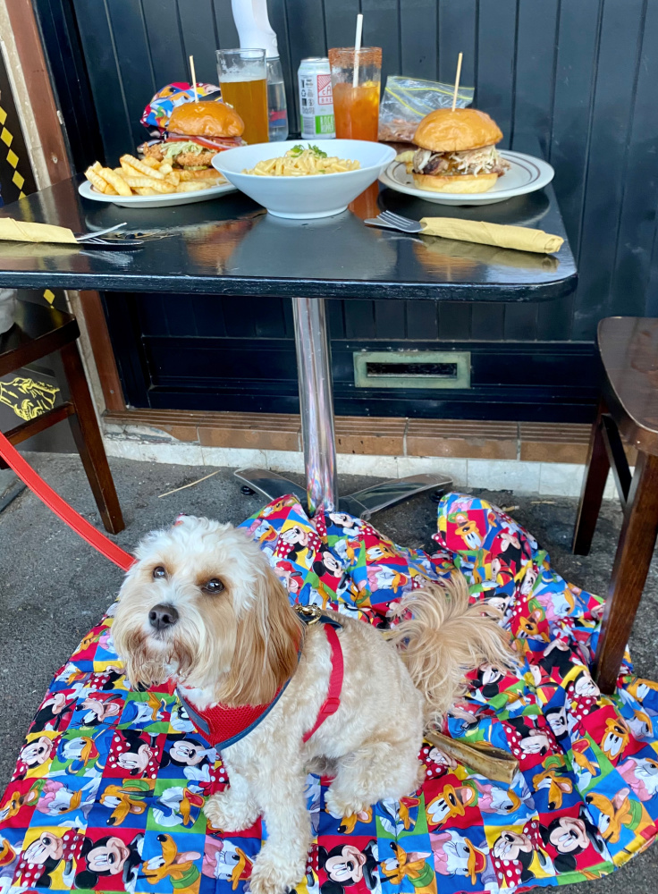 dog sitting under a table with burgers and mac and cheese on it
