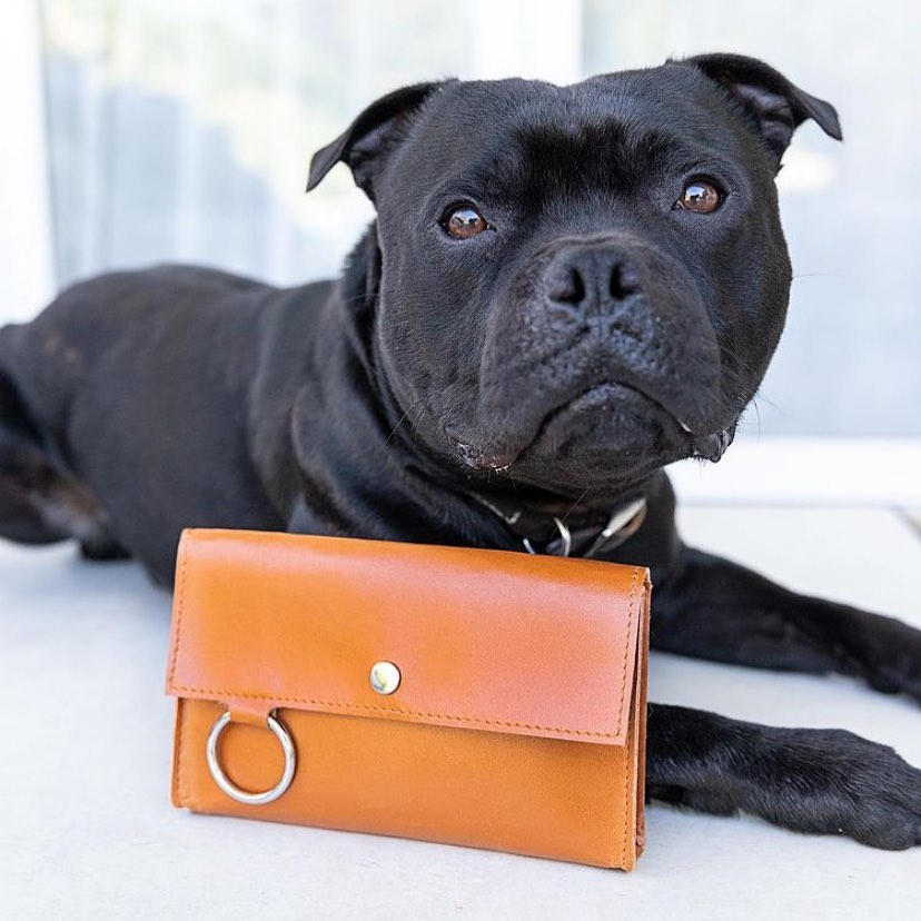 staffy lying next to leather treat pouch