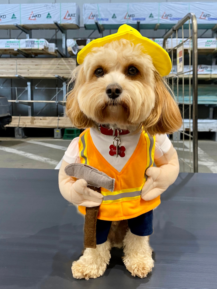 dog dressed in tradie outfit