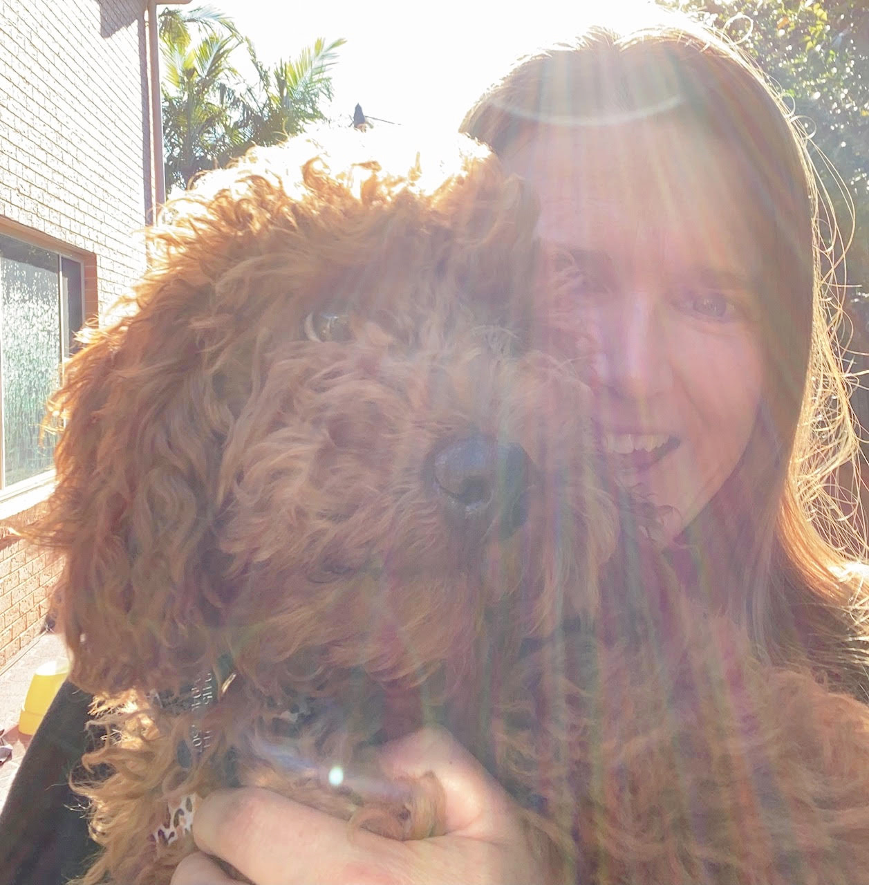 woman hugging a ruby spoodle in sunlight