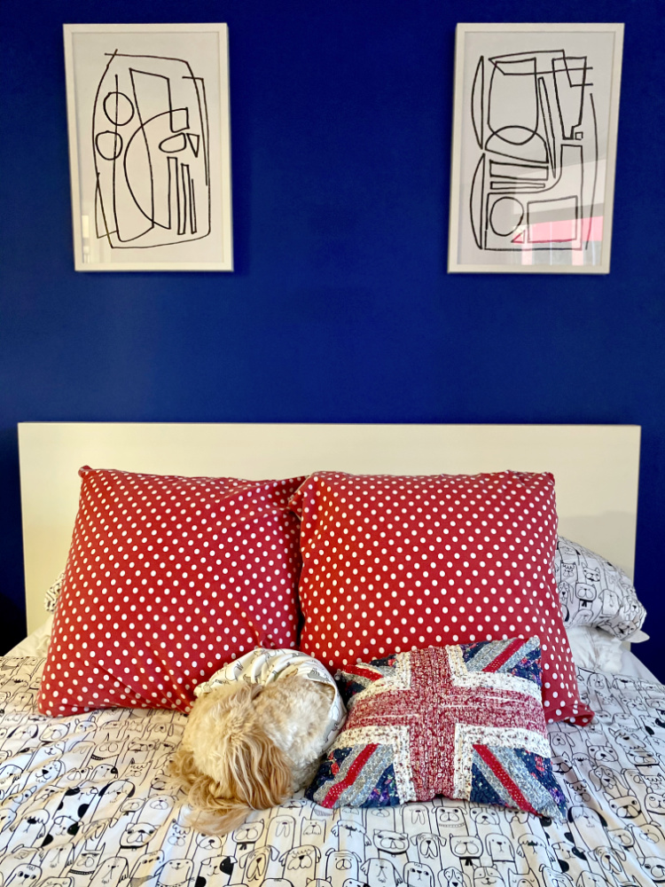dog curled up into a cushion shape on bed against dark blue feature wall