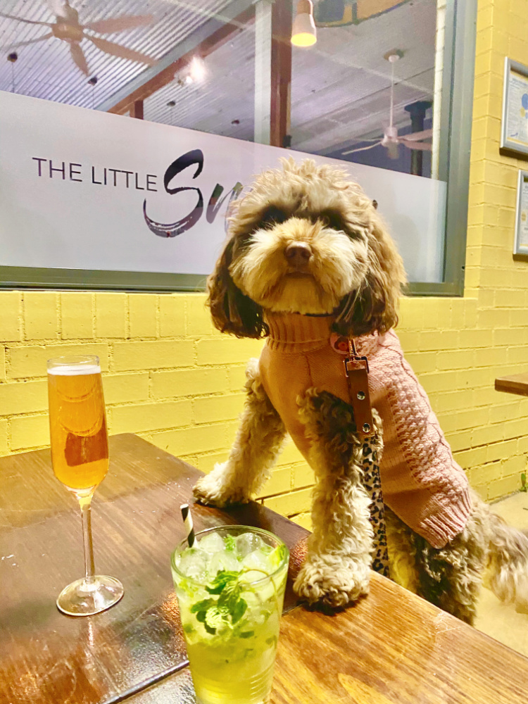 dog with paws on table looking at two cocktails
