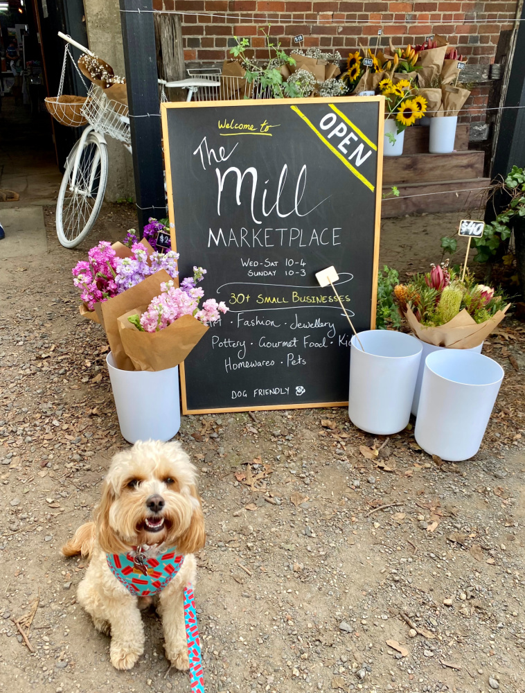 cavoodle sitting next to buckets of dried flowers and chalkboard advertising mill marketplace