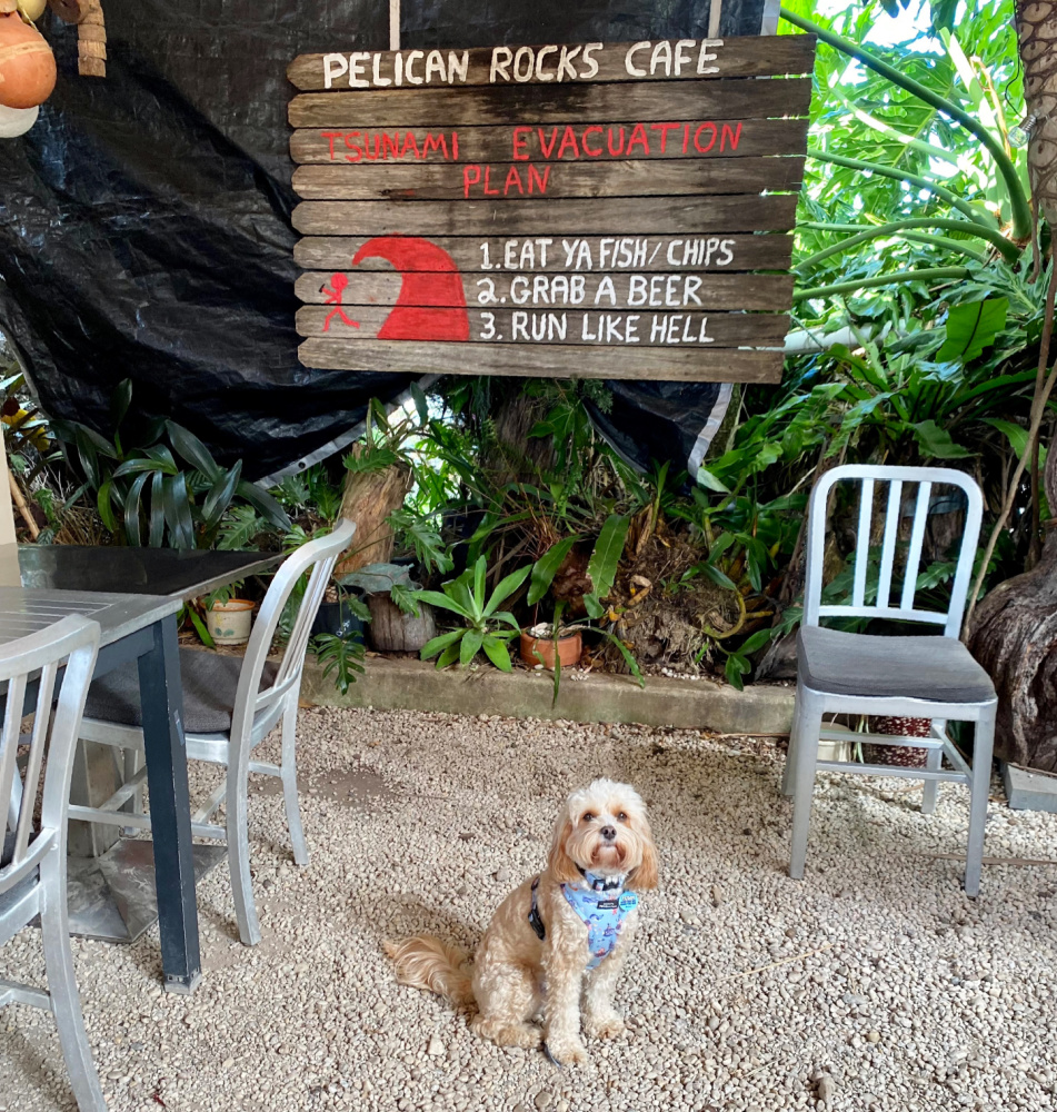 cavoodle sitting in covered outdoor seating area