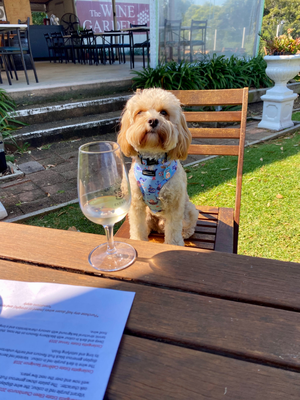 dog sitting on chair looking at a glass of wine