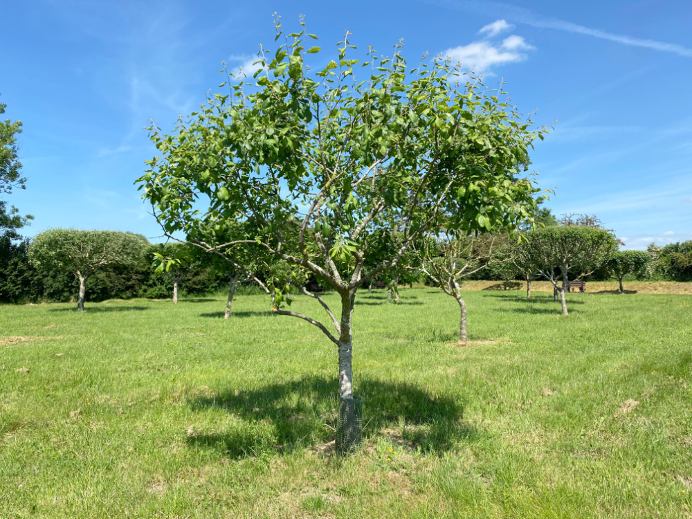 burial orchard