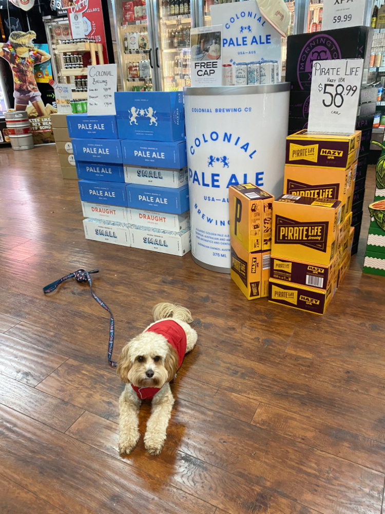 dog lying down by boxes of beer