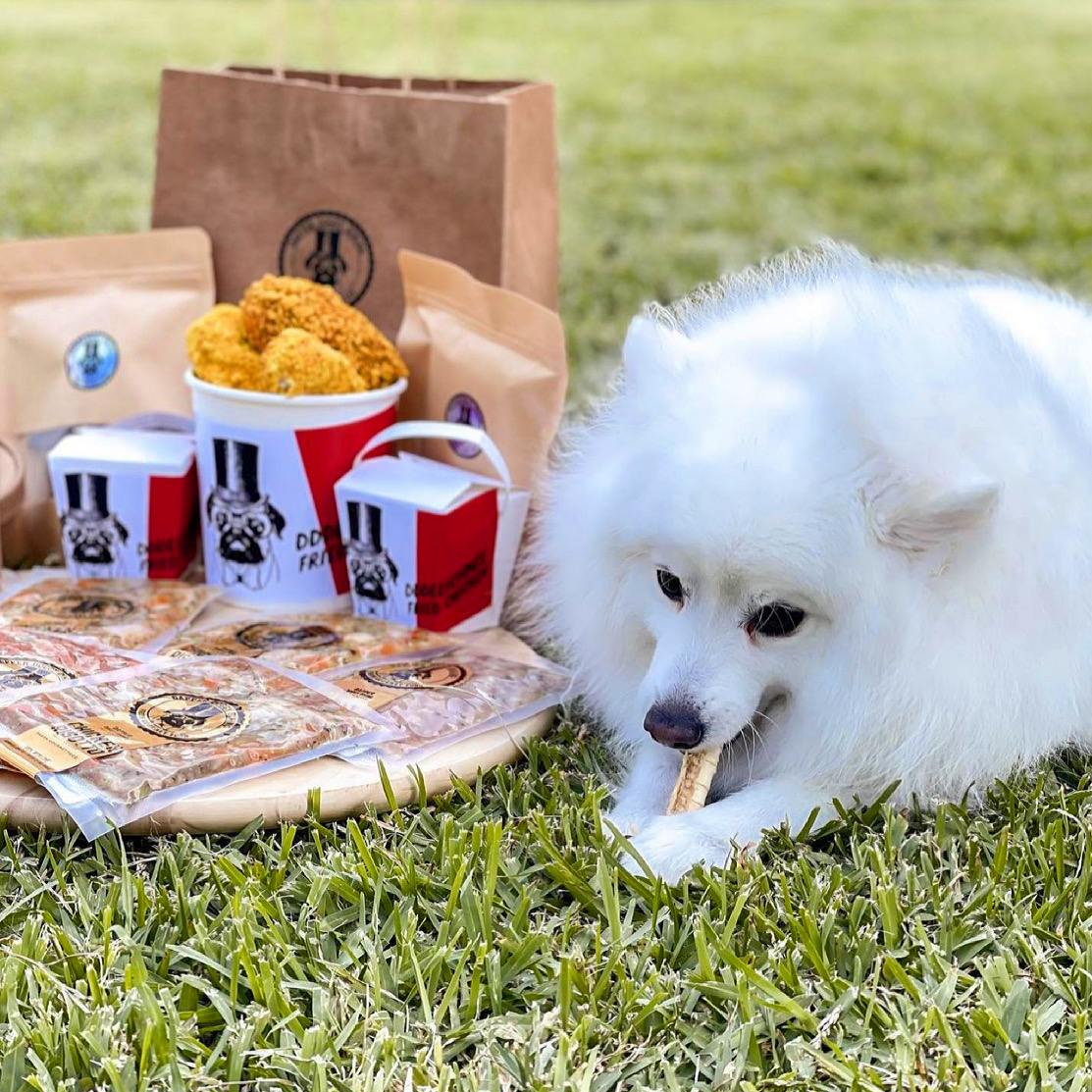Japanese spitz eating dapper doggy dining food