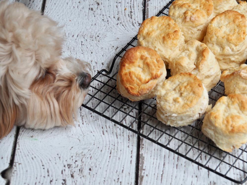 dog sniffing scones on cooling rack